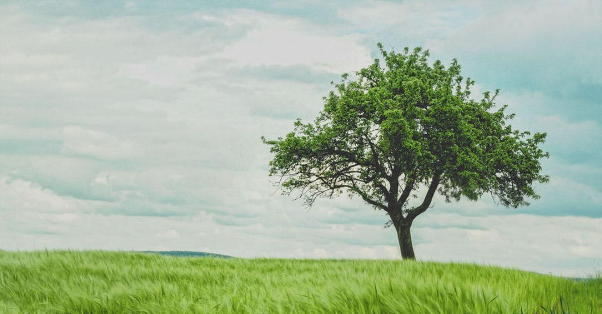 willpower tree